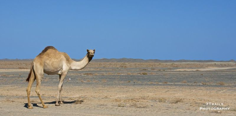 Mingling with the locals on the way to Masirah